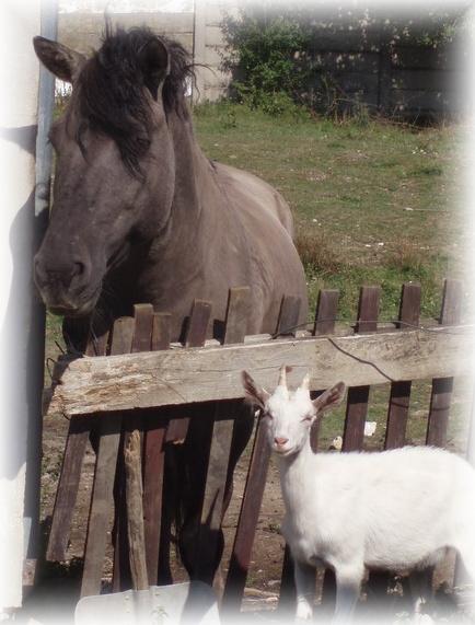 Koza Líza a Kůň Lístek