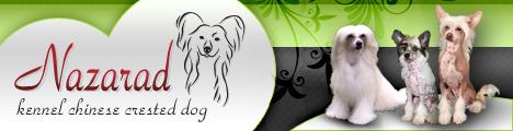 CHS NAZARAD - čínský chocholatý pes