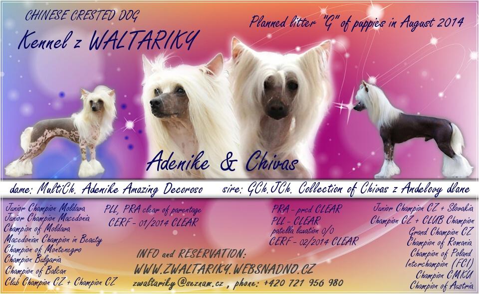 http://zwaltariky.websnadno.cz/new/ady__chivas_puppies_2014.jpg