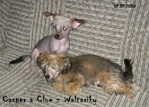 Casper a Clue z Waltariky