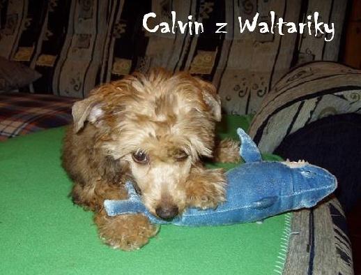 Calvin z Waltariky